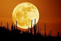 saguaromoon_seip800.jpg