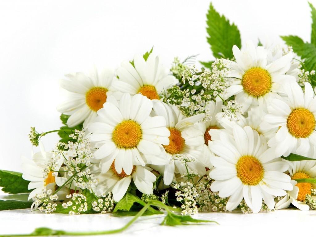 Картинки цветы ромашки букет 2
