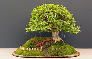 bonsai_landshaft.jpg