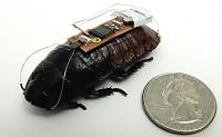 cockroach-steering.jpg